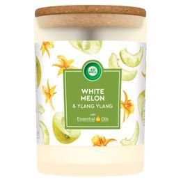 Świeca Air wick essential oils o zapachu Białego melona i kwiatu ylang ylang